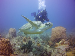 Aqua Safari Adventures Scuba Diving Green SeaTurtle w Diver