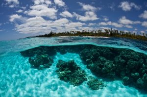 coral reef in New Caledonia - South Pacific luxury yacht charters