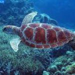 dive-snorkel-turtle