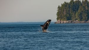 Pacific Northwest Charter Itineraries