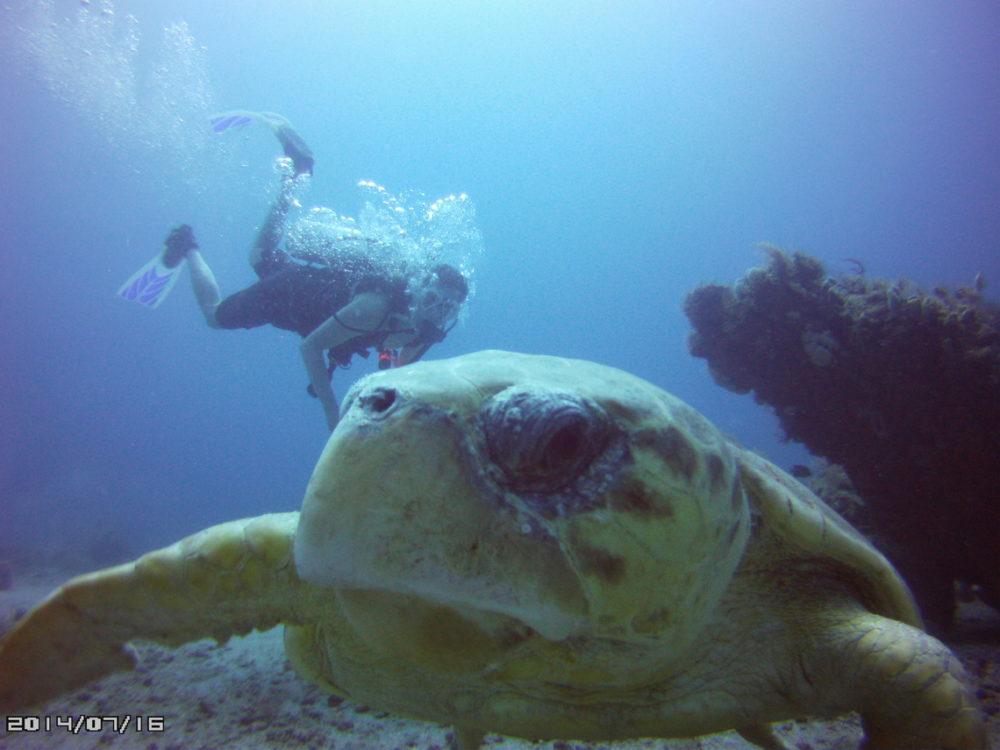Scuba diver and Loggerhead turtle by Aquasafaris
