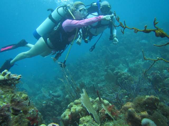 Scuba diving in the Virgin Islands. US VI Scuba diving picture.