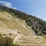 Stina Vineyards on Brac, Wine Tasting Dalmatia Croatia